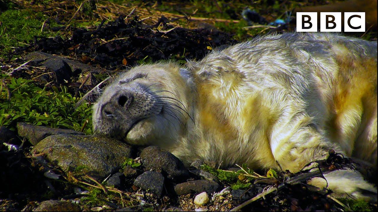 Best of British Wildlife ? 30.10.2020 ? BBC