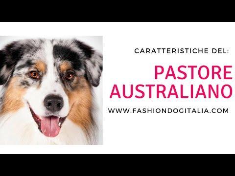 Pastore Australiano: caratteristiche di razza