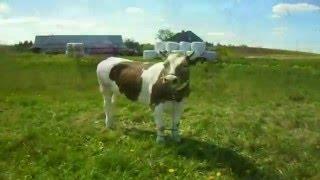 Gospodarstwo rolne u wuja 2016