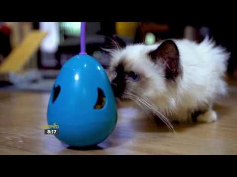 The Importance of Home Enrichment for Cats (HILLS)
