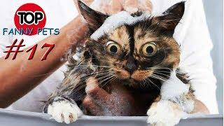 ПРИКОЛЫ 2019 ТОП СМЕШНЫХ ВИДЕО С КОТАМИ Смешные животные Смешные кошки TOP FUNNY PETS 17
