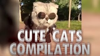 Cute Cats Compilation || FUNNY