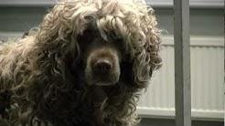 Koira suljetussa sairaalassa - A dog in a closed hospital - কুকুর - एक बंद अस्पताल में कुत्ता