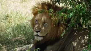 Park Narodowy Masai Mara -  Maasai Mara National Reserve Safari - Kenia - Safari 2015