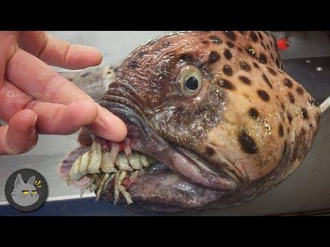 10 Animales Extraños Que Viven En Las Profundidades Del Océano