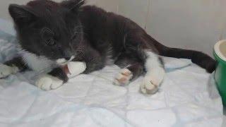 Кошка пред смертью Тяжелая форма пневмонии  Дари добро Приют для животных.