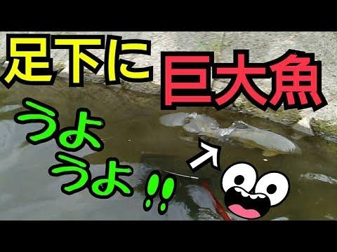 足下に巨大魚が突っ込んでくる水路でガサガサ!