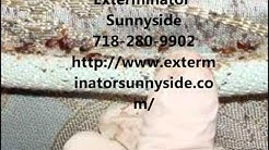 Pest Control Sunnyside 718-280-9902 Exterminator Service in Queens Bed Bug Removal