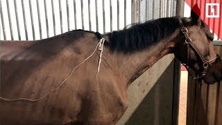 Лошадь сожгли и скрыли от хозяйки