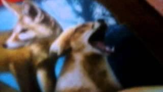 """Обзор книги коты воители """"Знак Трёх"""""""