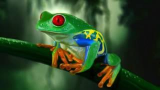 экзотические лягушки