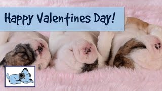 Give Your Dog The Gift Of Relaxing Music On Valentines Day! Dog Music, Sleep Music For Dogs!
