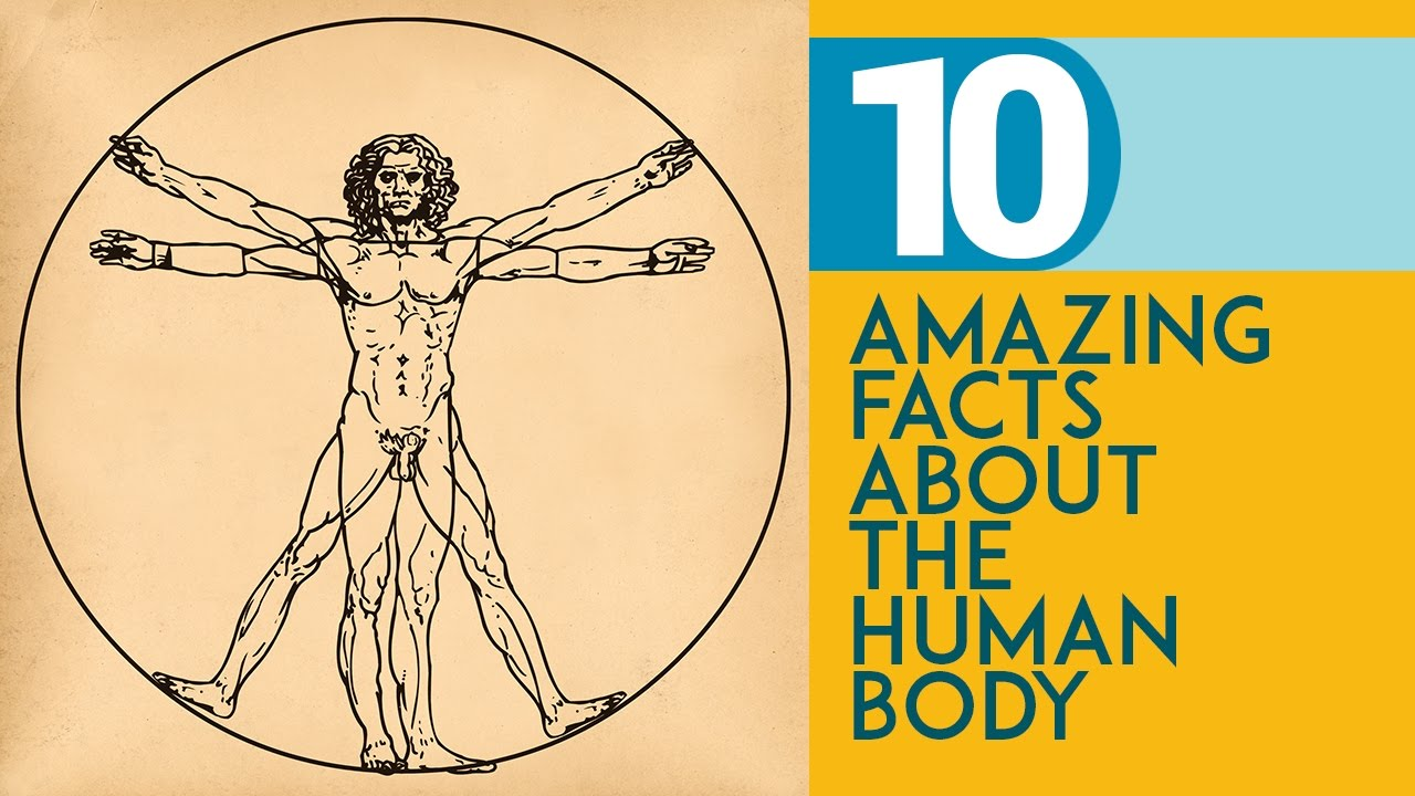 amazing facts about human body pdf