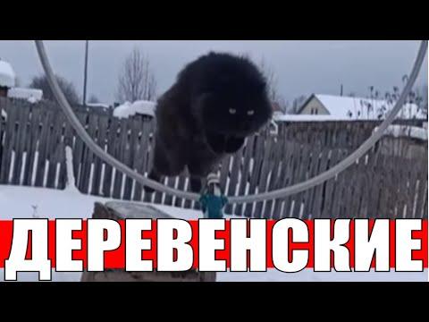 Очень умные деревенские кошки дрессировка / Very smart village cats training