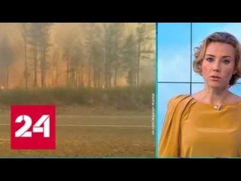 """""""Погода 24"""": в Амурской области и Забайкальском крае бушуют лесные пожары - Россия 24"""