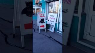 """Магазин """"Два кота"""" г. Иркутск"""
