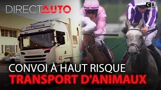 TRANSPORT D'ANIMAUX : CONVOI À HAUT RISQUE