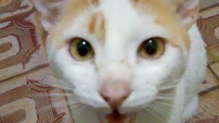 Banho felino…