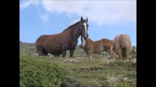 Grupo laberinto-la yegua cebruna