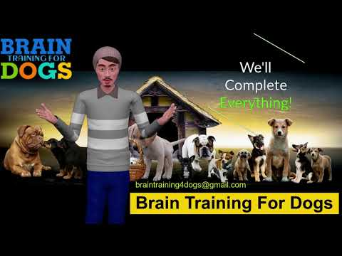 how-to-stop-dogs-barking-brain-training