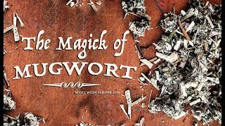 The Magick of Mugwort ~ The White Witch Parlour