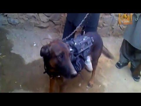 Military dog 'in Afghan Taliban custody'