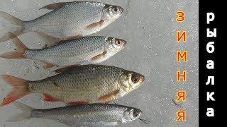 Проверка ночных жерлиц и рыбье ассорти.  My fishing.