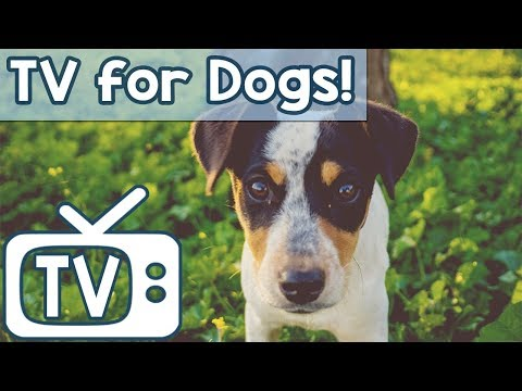 Dog TV - Relaxing Music TV for Dogs - Videos to help calm anxiety with Birds Squirrels and chipmunks