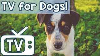 Relaxing Music TV for Dogs - Videos to help calm anxiety with Birds Squirrels and chipmunks