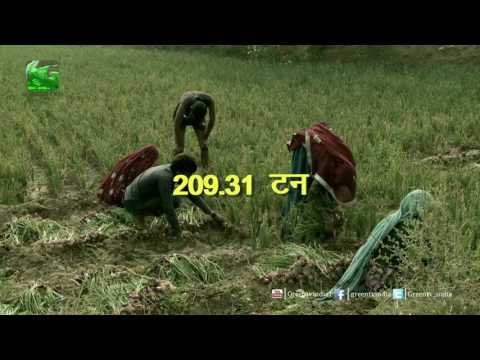 Hike In Onion Price is expected due to less supply in Delhi On Green TV