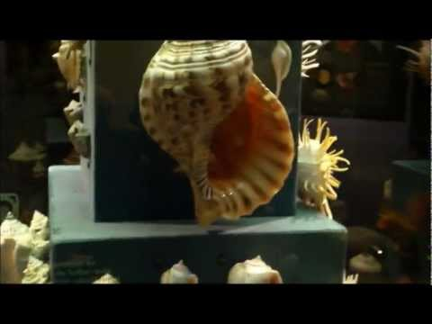 A Walk Through The Shell Exhibit At Fernbank Museum In Atlanta Ga