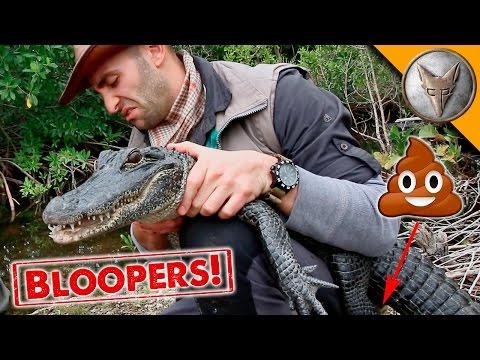Alligator Poops on Host!