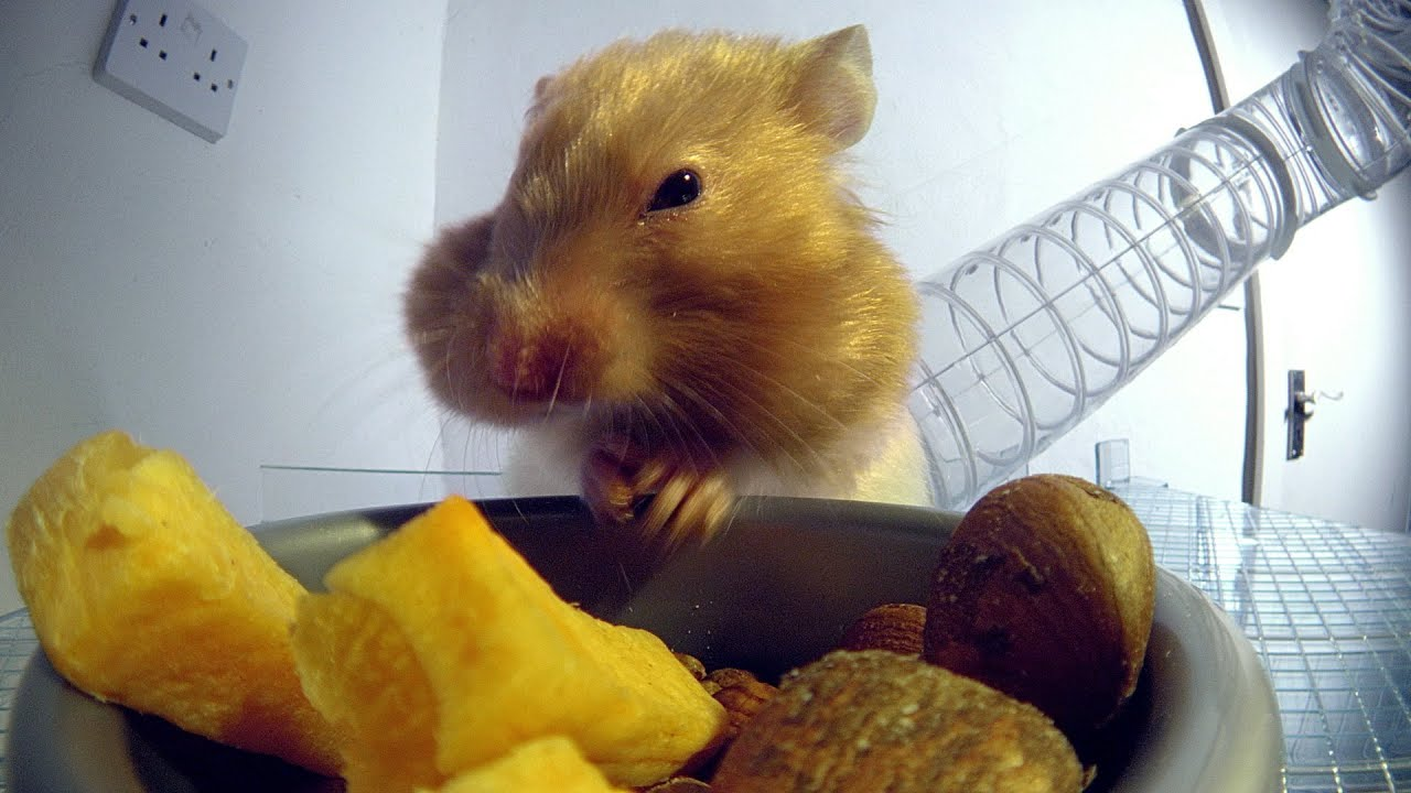 hamsters x Hamster Housing - Small Animal Advice - Wood Green, The Animals.