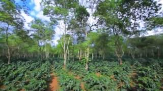 รายงานพิเศษ - 'ดาวคอฟฟี่' สินค้าลาวขายดีในไทย (Dao Coffee)