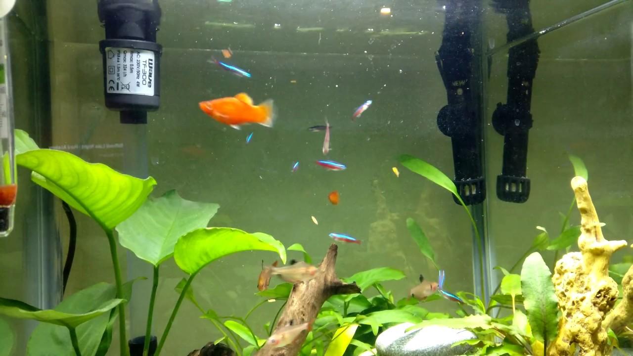 Haustierbedarf Fische & Aquarien Wave Laguna Led 40