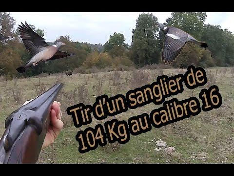 tir d'un très gros sanglier lors d'une chasse aux pigeons