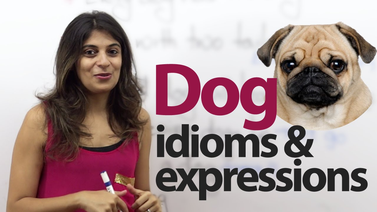 """Do And Frases: Learn English Phrases & Idioms With """"dog"""""""