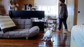 糸満市のフレンチブルドッグ「モモちゃん」の1日。 http://vimeo.com/2...