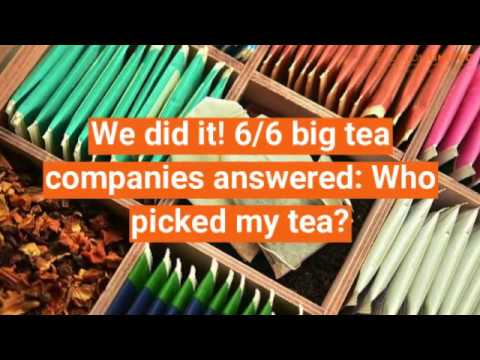 Who picked my tea? Ask your favourite brand if their tea is slavery-free