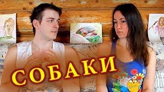 БЕЗДОМНЫЕ СОБАКИ в Москве ☯ Культурный код