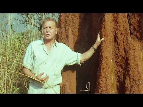 Termites Architecture   Trials Of Life   BBC Earth