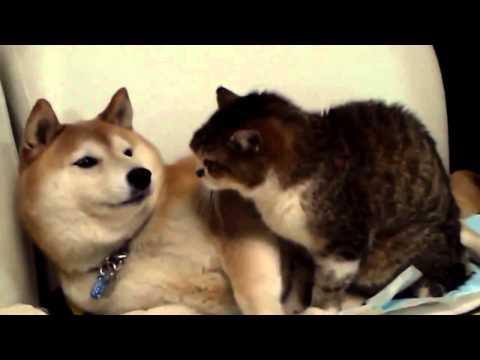 Lustige Tiere Videos Witzige Tiere Videos, lustige Tiervideos Teil 5 ~ Witzigstes Anim