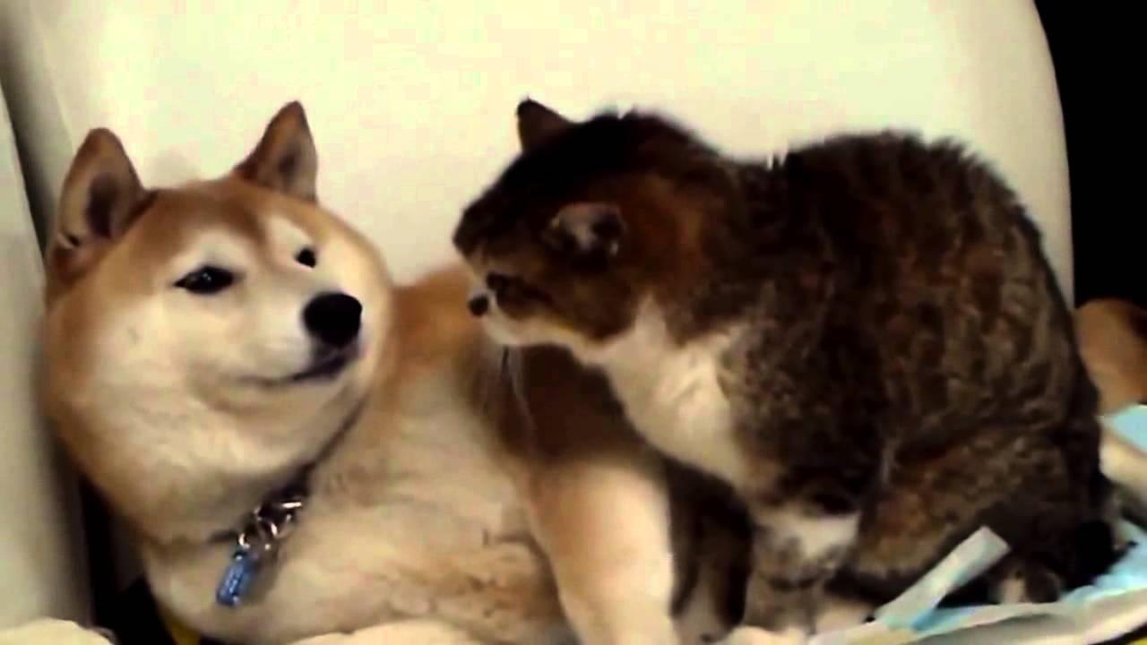 Lustige Tiervideos Youtube