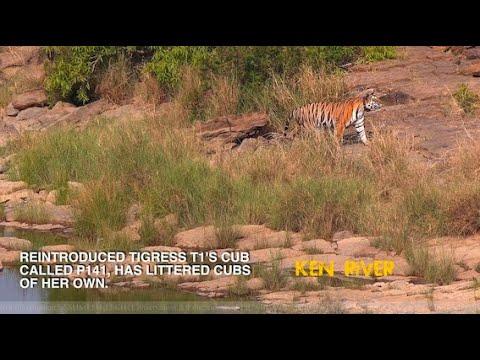 An Appeal regarding Ken-Betwa river linking