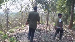 One day in the Jungle 2018