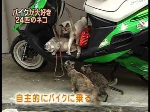 NHK Fuji Tv Japan