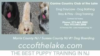 Puppy Training Hackettstown Nj