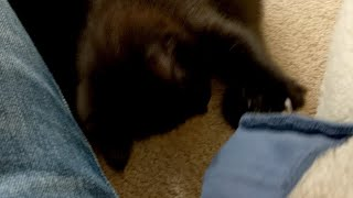 Kitten Close Up 2018-04-13 thumbnail