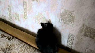 Кролик Дювик объел обои в прямом эфире / Eating the wallpaper