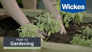 How to Build a Herb Garden with Wickes